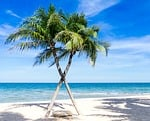 karaiby, palma drzewa, pacyfiku