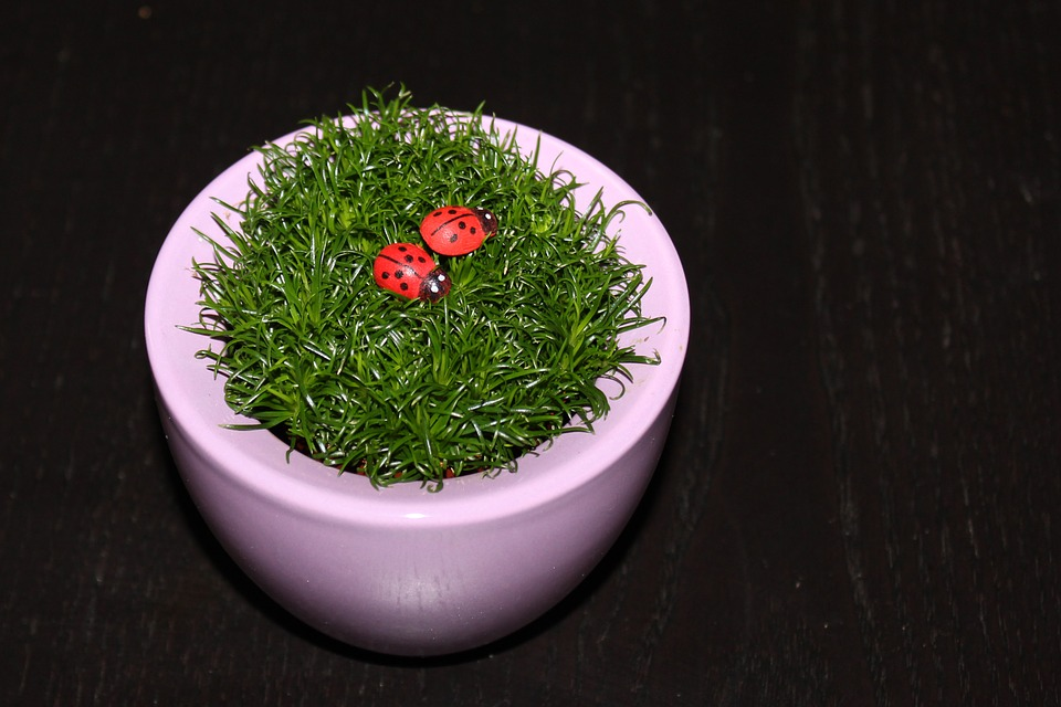 Rumput Kumbang Kecil Pot Bunga Foto Gratis Di Pixabay
