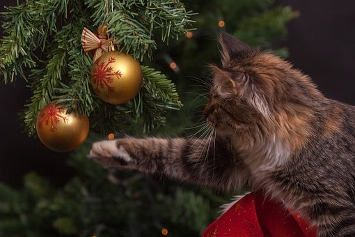 Nouvel An, Chat, Décorations De Noël