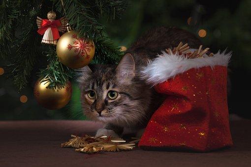 Nouvel An, Chat, Cadeaux