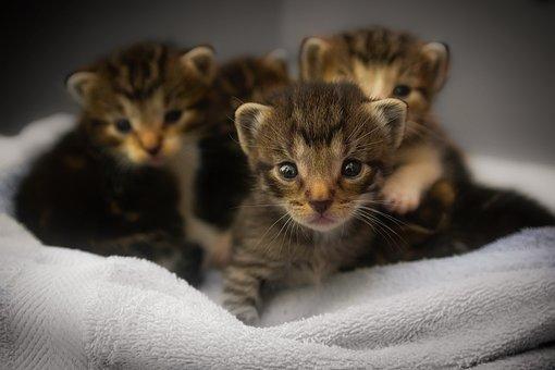 Anak Kucing, Kucing, Licik, Hewan, Makro