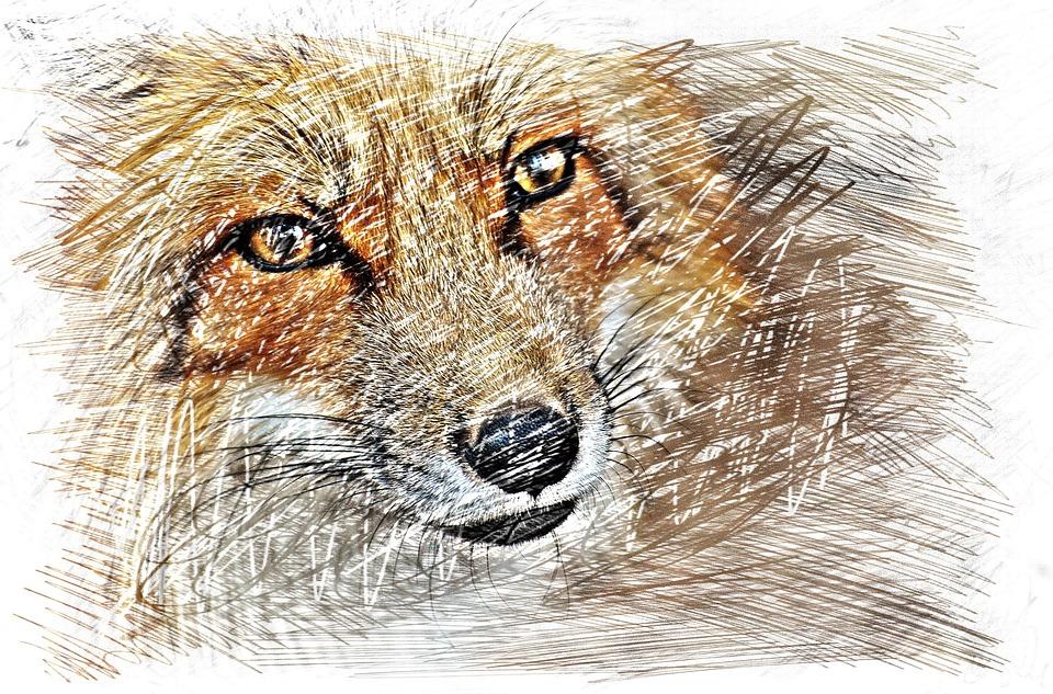 Kostenloses Foto Fuchs Zeichnung Bunt Kostenloses