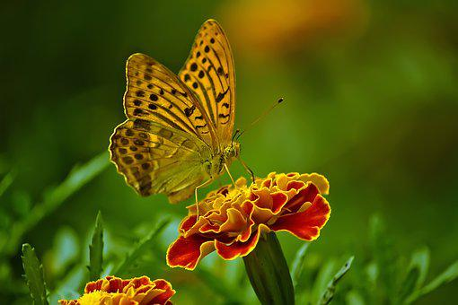 Butterfly Nature Flower Insect Close Up Ou