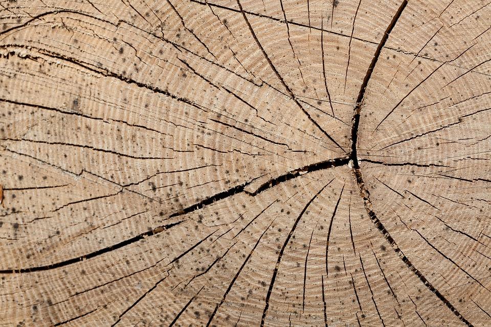 wood trunk rings free photo on pixabay