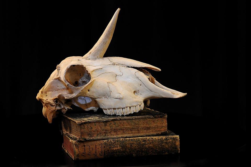 Einhorn Schädel Knochen · Kostenloses Foto auf Pixabay
