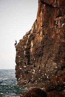 Pelican, Bird, Birds, Mexicanbird