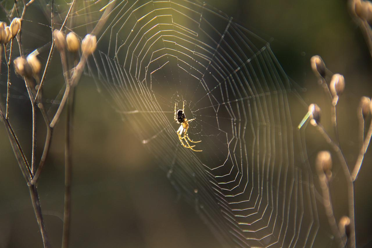 Пауки картинки в паутине
