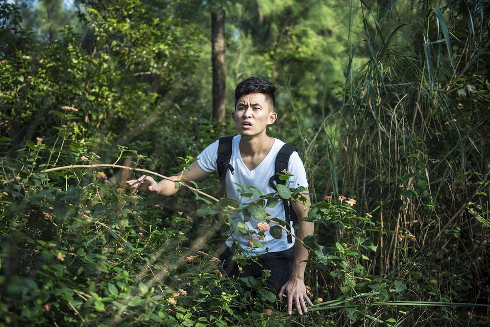 Il Selvaggio, Foresta, Labirinto, Scolaro