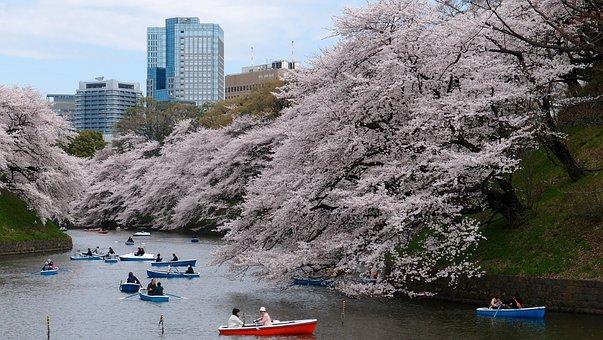 ボート, 桜の花, 公園, 川, 春, 東京
