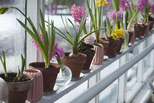 flores, en, macetas - imágenes gratis en pixabay