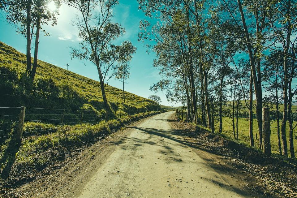 ツリー, 道路, 風景, 通路, 森林, アウトドア, 草, パス, 環境, 天気予報, 方法, 光, 秋