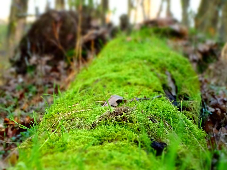 moss lively fallen free photo on pixabay