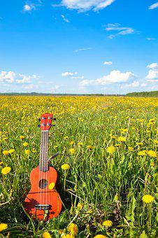 Flower, Guitar, Sky, Summer, Ukulele