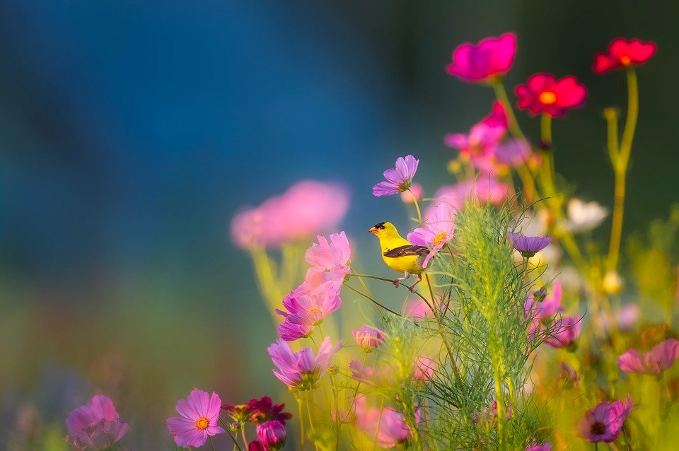 Flowers, Plants, Blooms, Bird, Wildlife, Landscape