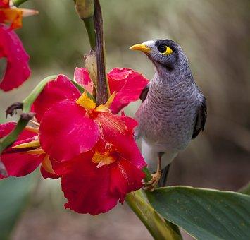 Ave, Bloom, Flor, Primer Plano, Flora