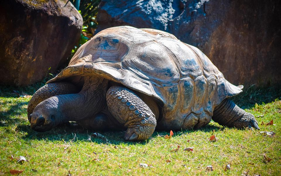 Giant Tortoise Farm - Things to do in the Seychelles
