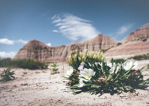 Bloom Blossom Desert Flora Flowers Landsca