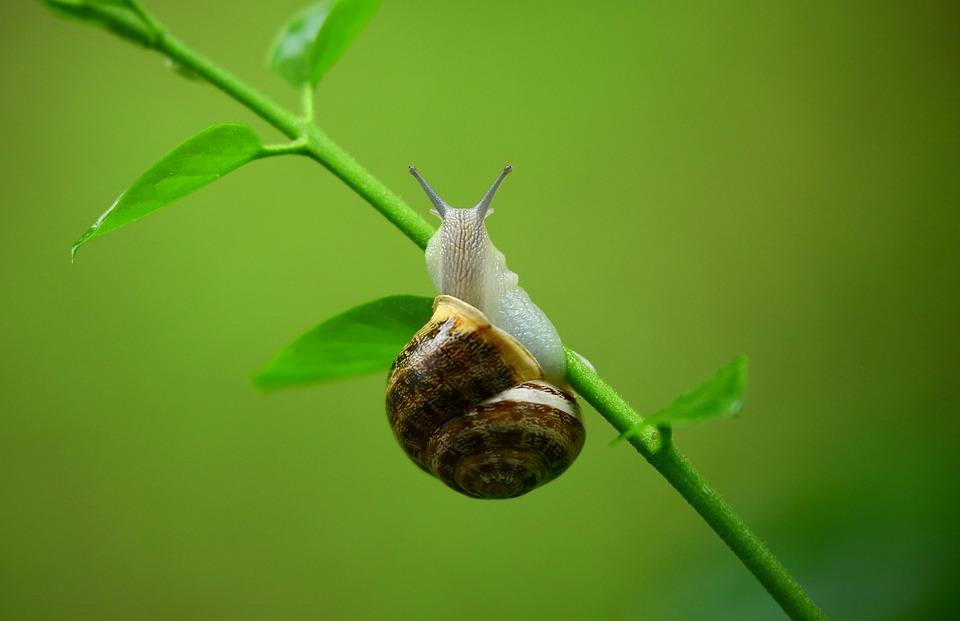 蜗牛,煤泥,软体动物,腹足类特写,动物,青蛙,动物岸上有五只叶子图片