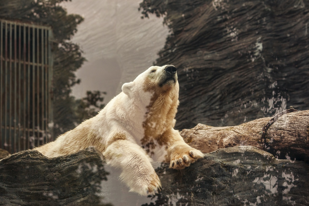 北极熊图片大全大图