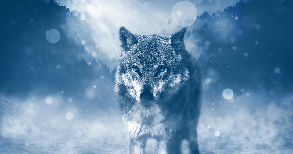 オオカミ, 捕食者, 動物, Fleichfresser, 冬, 風景, 降雪, 野生動物, 神秘的な, 冷