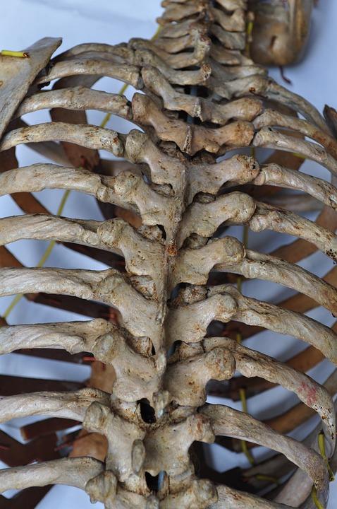 Huesos Esqueleto Vuelta Columna · Foto gratis en Pixabay