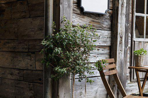 Architecture, Chair, House, Plant