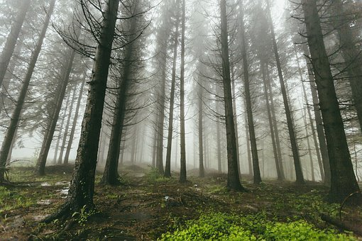 Fog Forest Nature Trees Woods Forest Fores