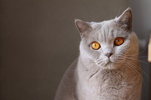 Tier, Katze, Nahaufnahme, Katzen