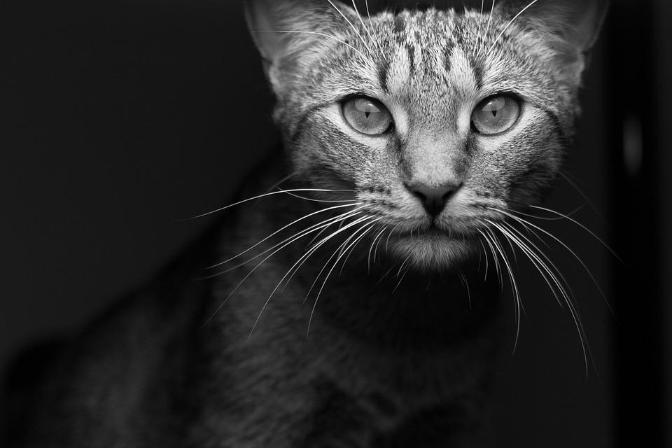 Zwierząt Kot ładny Darmowe Zdjęcie Na Pixabay