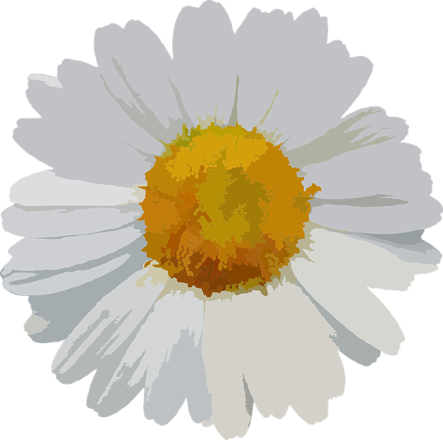 Flower Floral Daisy · Free vector graphic on Pixabay White Daisy Flowers Clipart