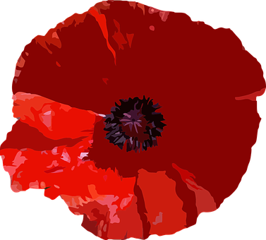 Red Poppy Images Pixabay Download Free Pictures