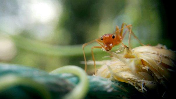 Ant, Macro, Macro Photography