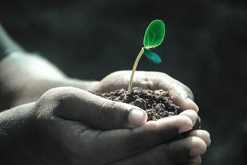 Hands, Macro, Plant, Soil, Grow, Life