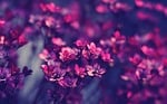 kwiat, makro, flora
