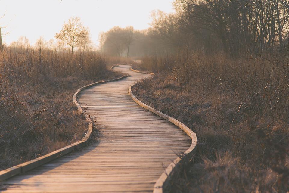 パス, 湿原, アウトドア, 木製の板, 草, 風景, 木製の島, 茶色の風景, 茶色の草, 茶道