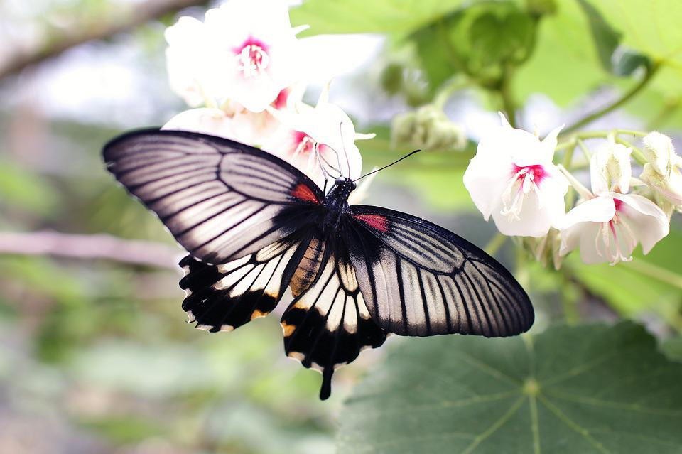 Butterfly, Wings, Flowers, Pollinate, Pollination