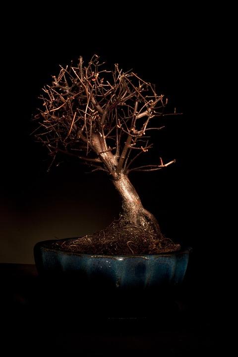 Bonzai Strom Svetle Zbarveni Fotografie Zdarma Na Pixabay