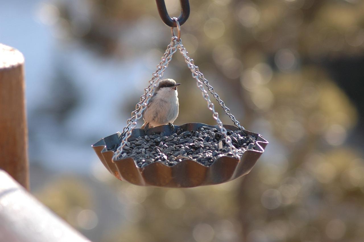 кормушки для птиц все фото