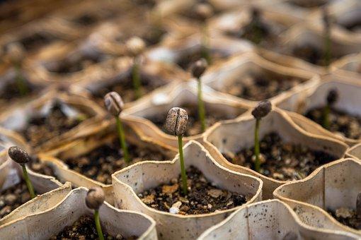 Macro Vivero Plantas Plantas De Semillero
