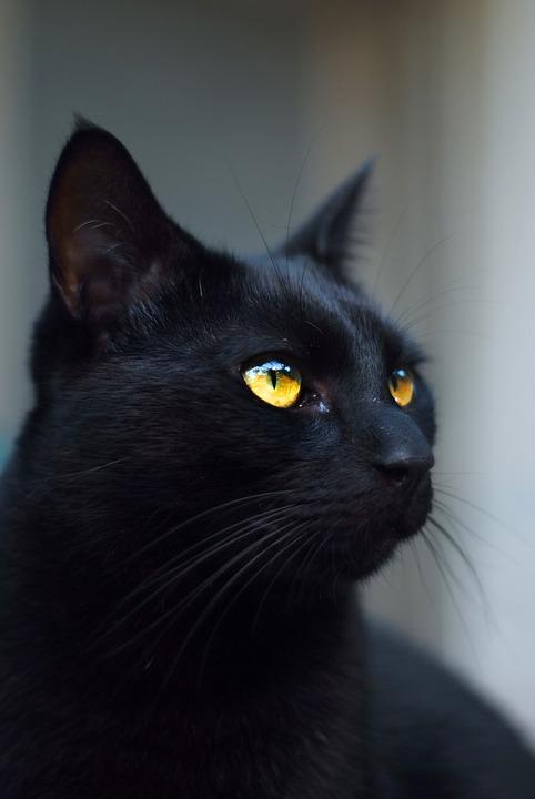 černá kočička černá