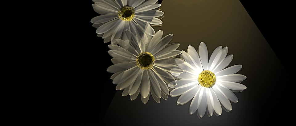 free illustration daisy, flowers, spring, light  free image on, Beautiful flower