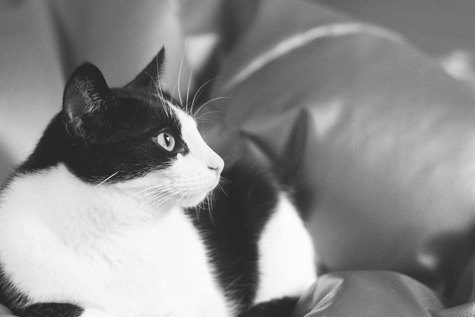 b5c65f4b6bf4 Γάτα Γατάκι Γάτος - Δωρεάν φωτογραφία στο Pixabay