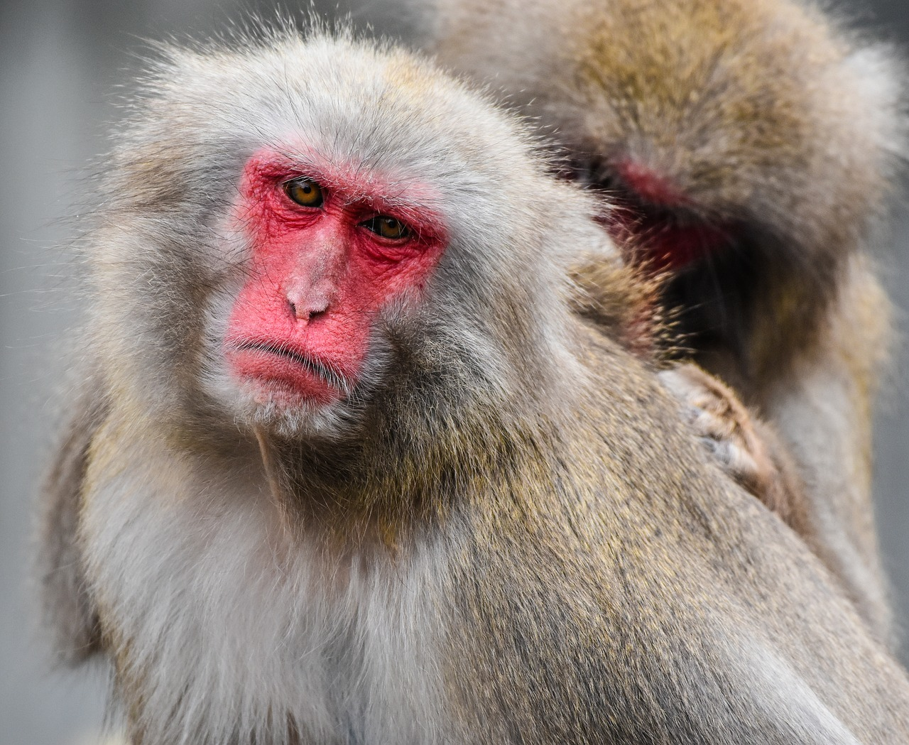 Смешные картинки красного лица