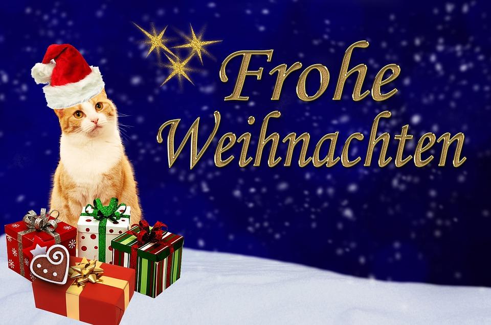 Frohe Weihnachten Katze.Weihnachtskarte Katze Frohe Kostenloses Bild Auf Pixabay