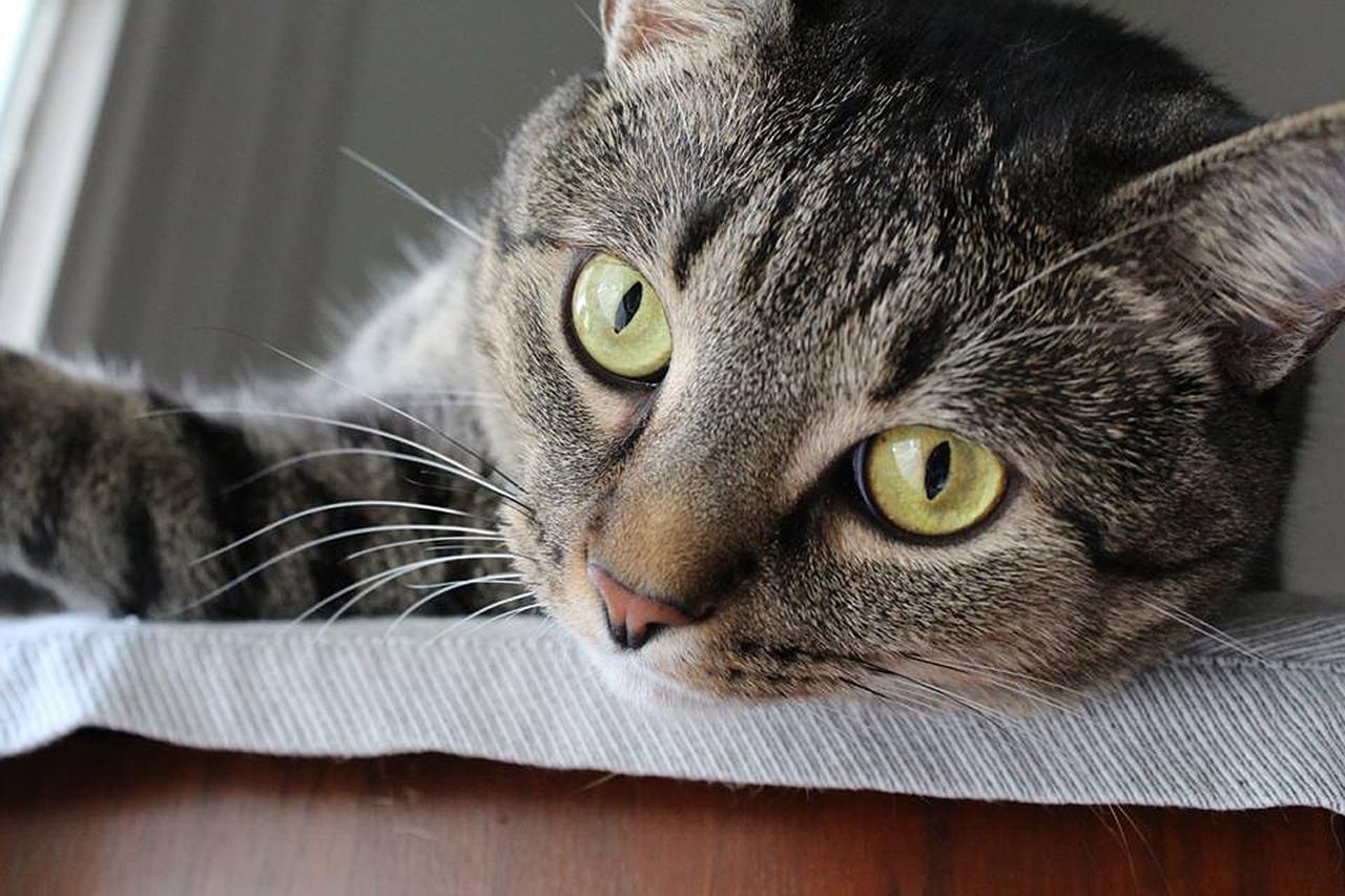 cat scratch post files nails