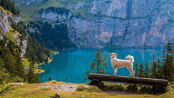 Aussicht, Bergsee, Bank, Hund