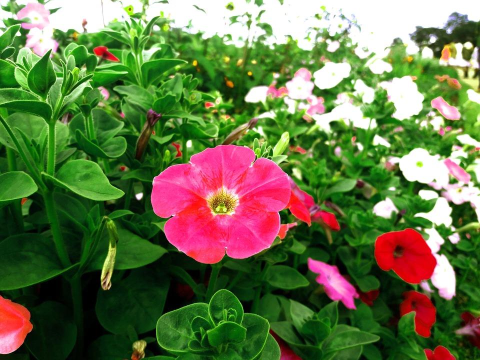Schöne Blumen Garten Kostenloses Foto Auf Pixabay