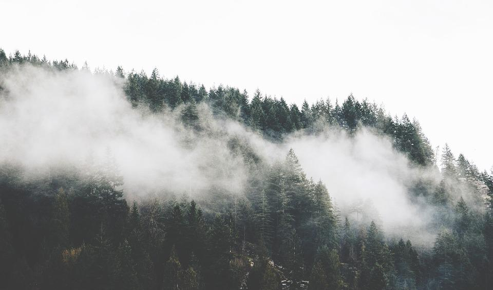 Fog, Forest, Mountain, Nature, Pine Trees, Trees