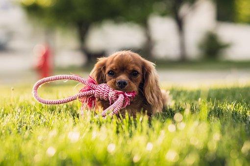 Aanbiddelijk, Dierlijke, Hond, Cute