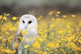 Animal, Bird, Field, Flowers, Grass